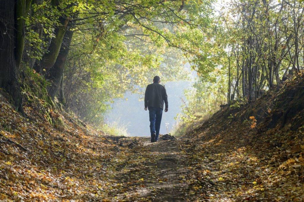 Autumn in The Forest - iStock_000050857662_Medium